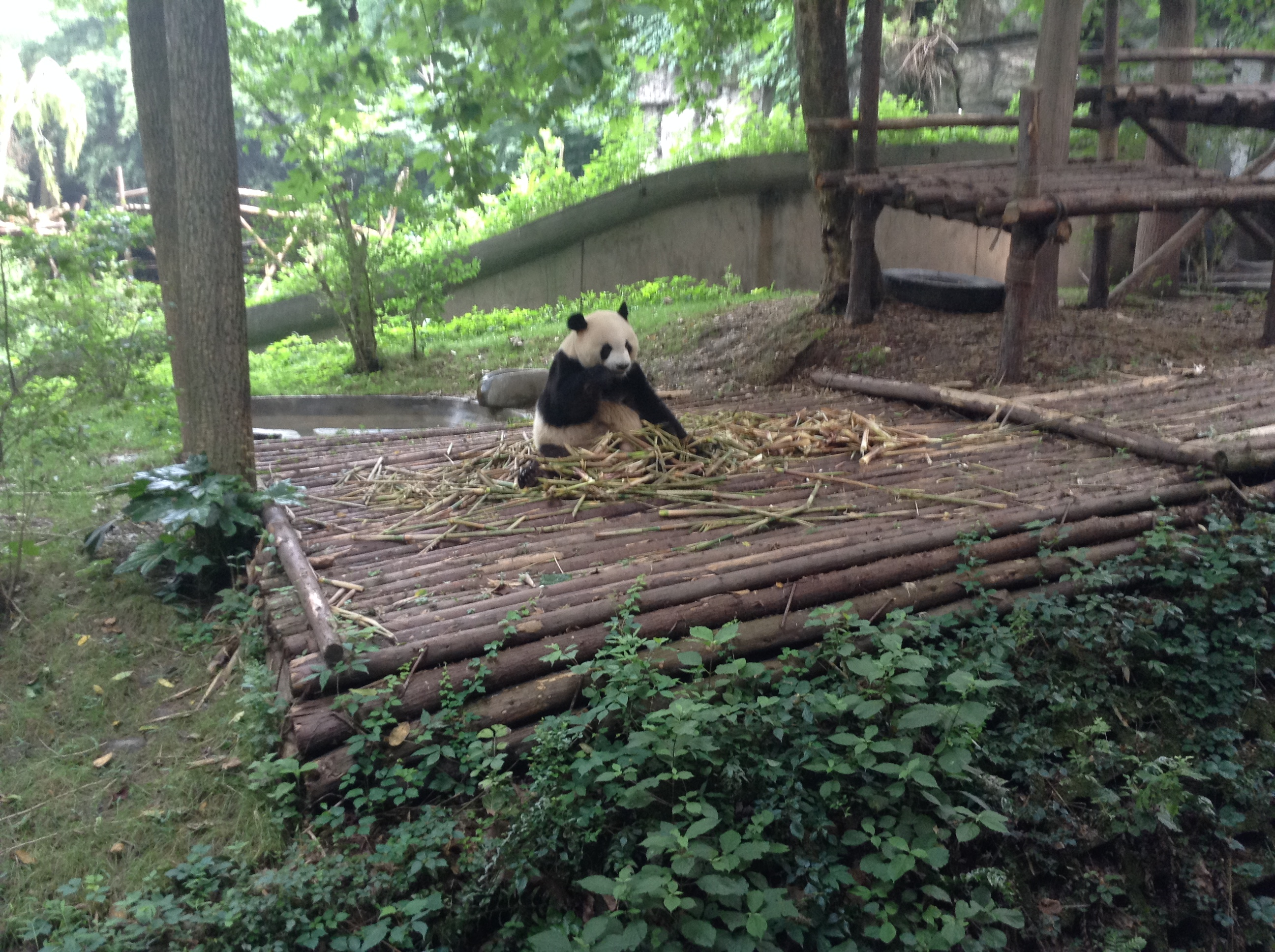 Rolling green hills of China: A tale of hotpots and pandas