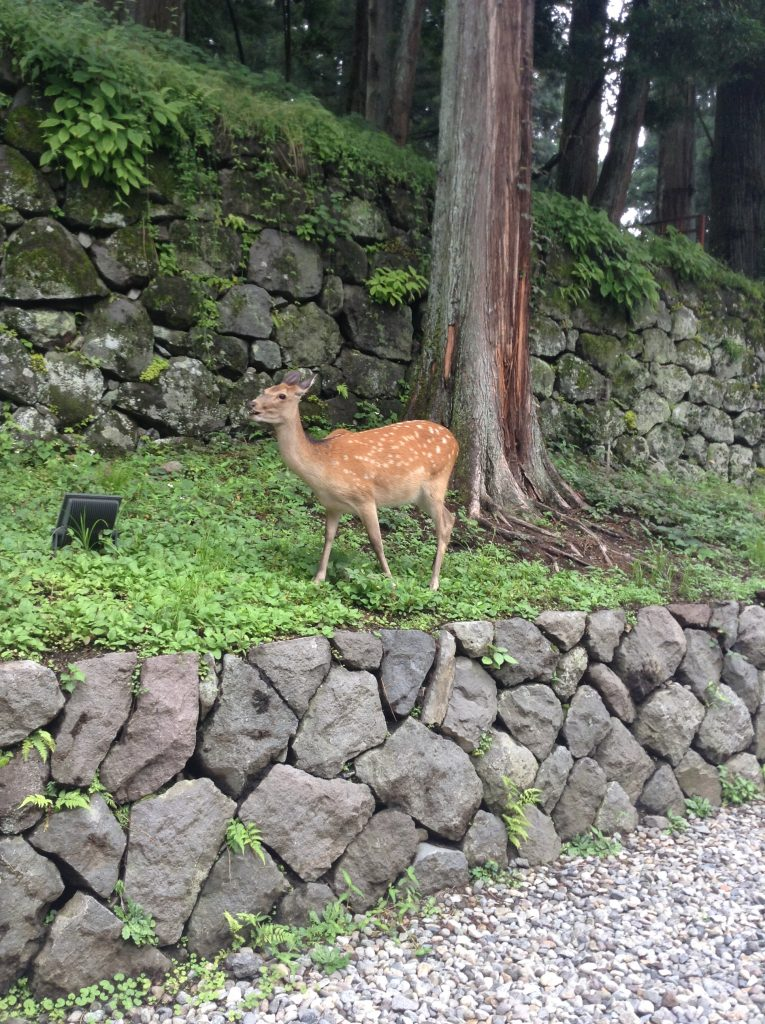 Nikko park