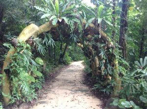 singapore rainforest