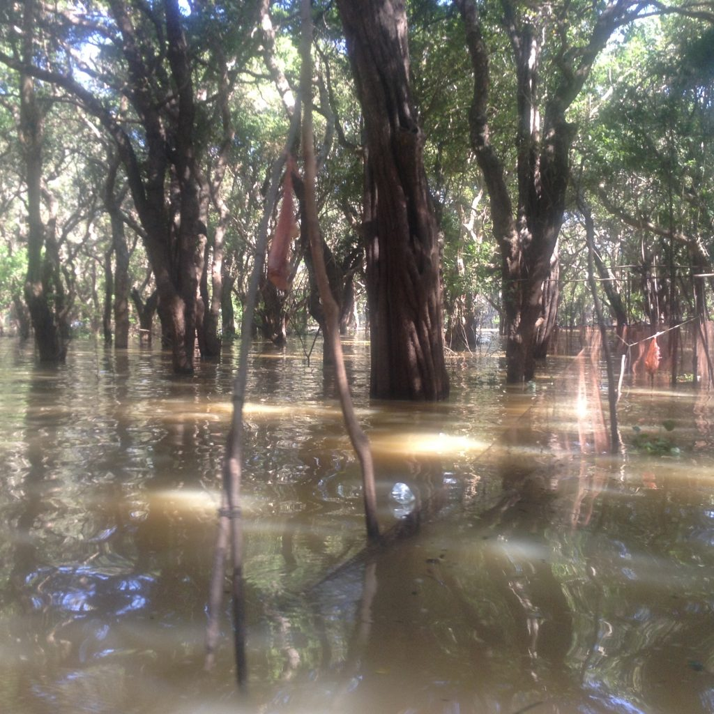 river trees cambodia