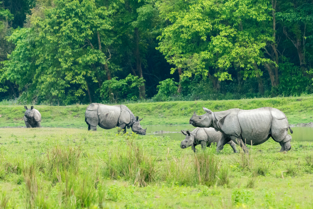 Kaziranga National Park, backpacking north east india