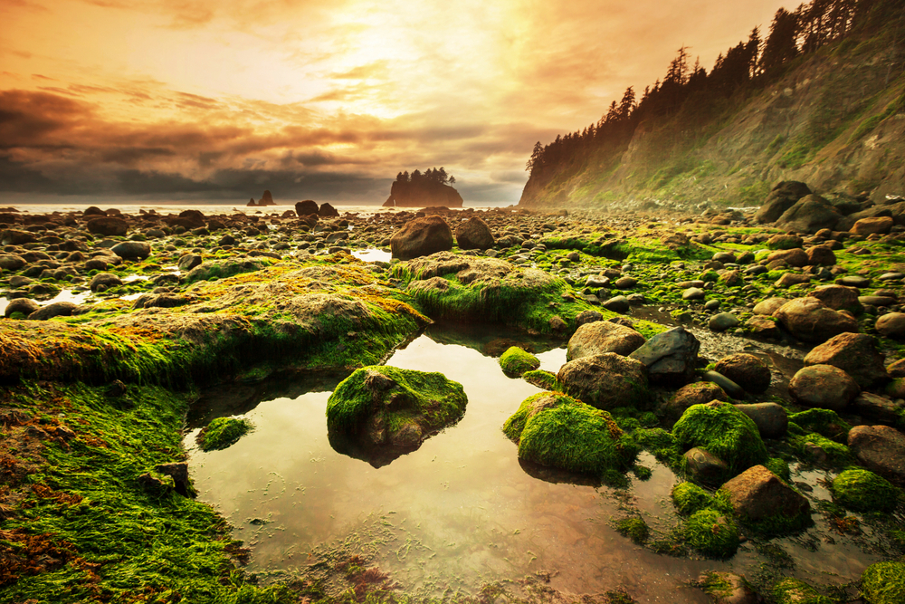 olympic national park, west coast holiday itinerary
