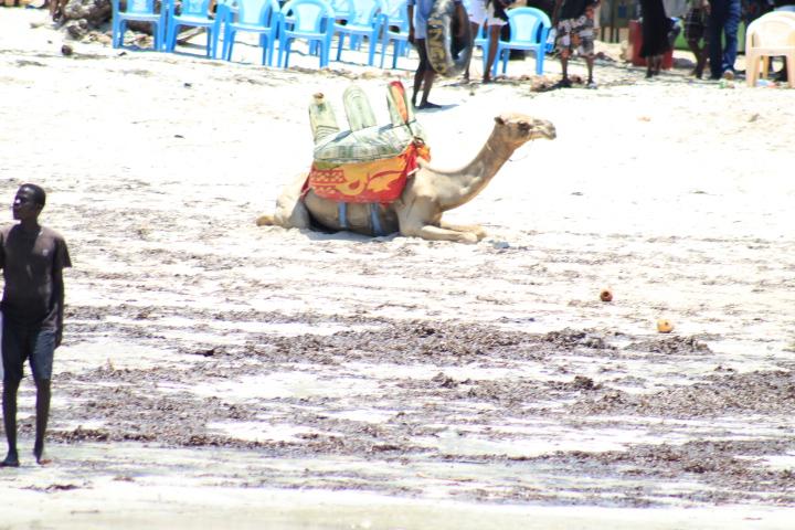 Diani beach,