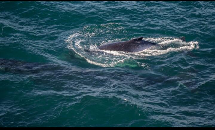 wildlife, guest blog, sharks