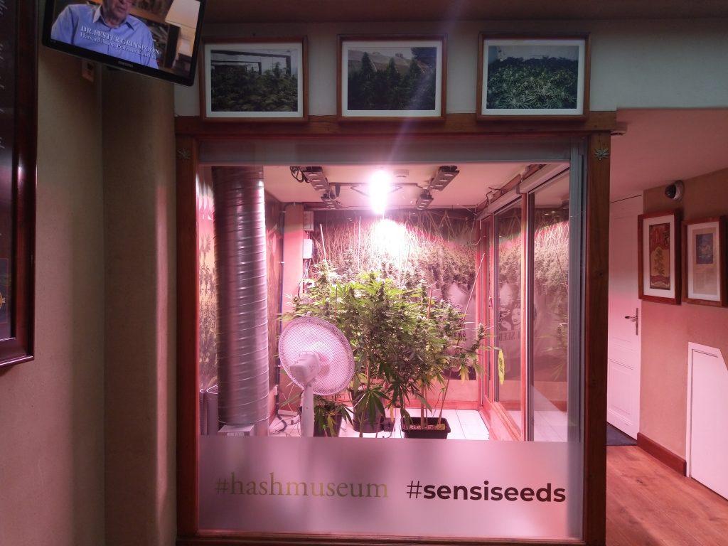 Hash Marijuana & Hemp Museum, cannabis museum
